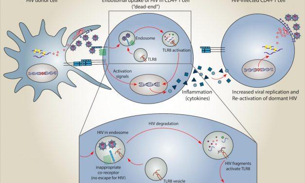 Un mecanism nou descoperit permite sistemului imunitar să detecteze și să răspundă infecției cu HIV