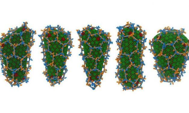 Oamenii de știință dezvăluie secretul din spatele unei molecule care blochează infecția cu HIV