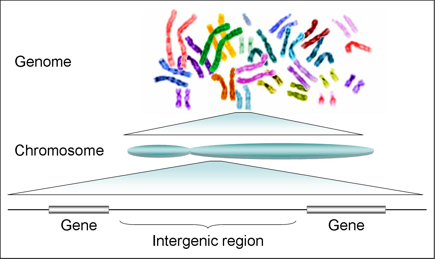Cel mai vechi genom al virusului HIV, descoperit într-o mostră uitată de ţesut din 1966